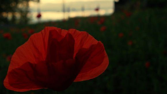 http://thisiswhimsical.cowblog.fr/images/Photos/IMGP2808.jpg